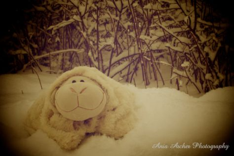 Ania Archer Photography, Winter, Sheepy, Toy,
