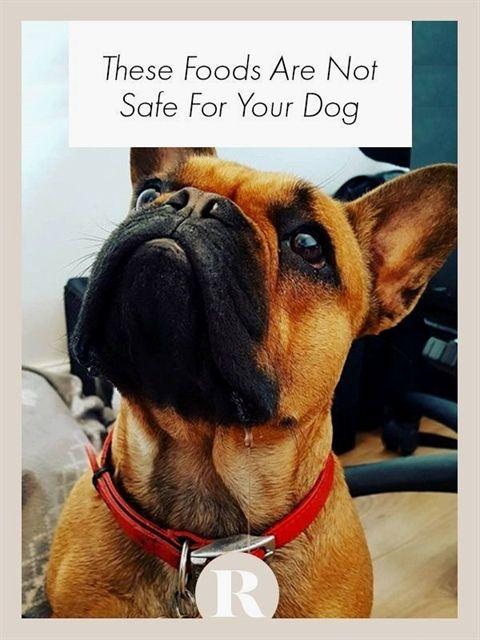 Dog Training Food Aggression Clicker Dog Training Method Garmin