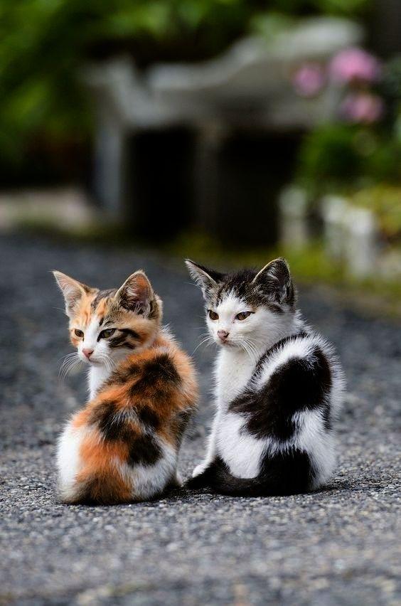 Cute Cats Sneezing Cute Kittens Purring Kittens Cutest Cute Cats Baby Cats