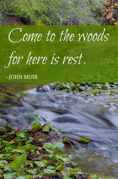 """""""Come to the woods for here is rest."""" John Muir Quote:"""