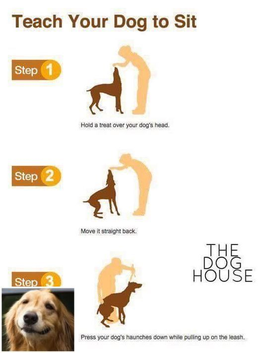 Stop Dog Jumping And Easy Dog Tricks Check The Image For Various