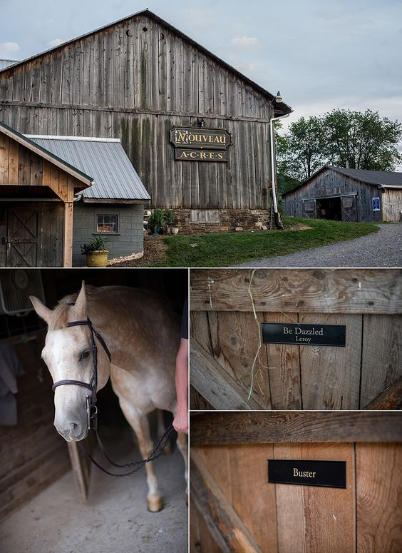 Locations could be anywhere.  This session we went to the land where the brides horses live.