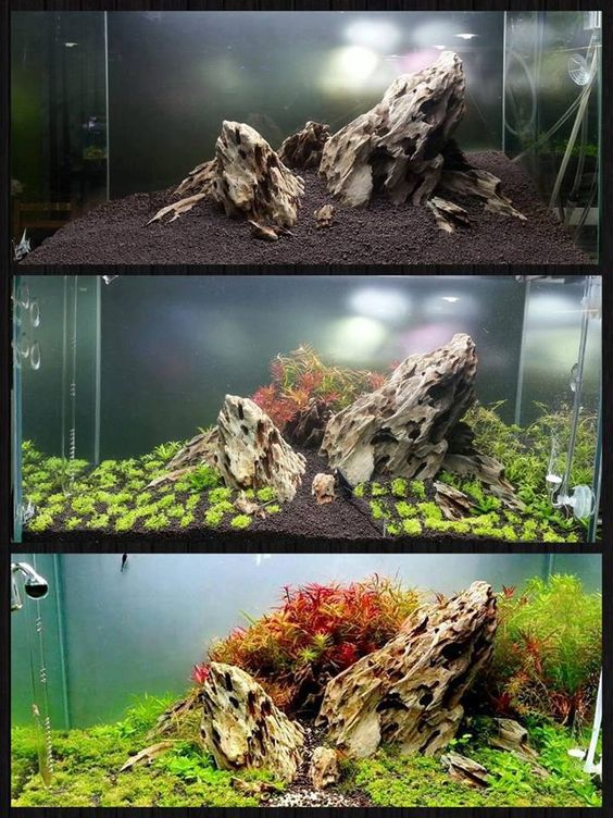 """What an abundance of colours in this tank!""""Reborn"""" by Coffman, via Aqua Design Innovations"""