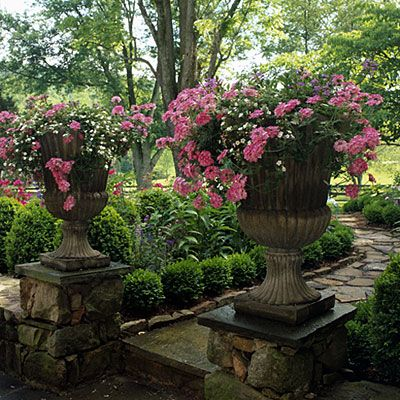 Raised Urns...pink Verbenas and white bacopas