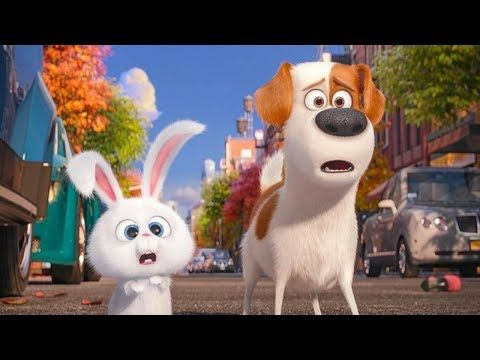La Vida Secreta De Tus Mascotas Peliculas Animados Para Niños En Español Latino Completas Youtube Secret Life Of Pets Pets Movie Kid Movies