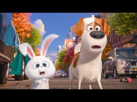 La Vida Secreta De Tus Mascotas Peliculas Animados Para Niños En Español Latino Completas Youtube Secret Life Of Pets Pets Movie Kid Movies