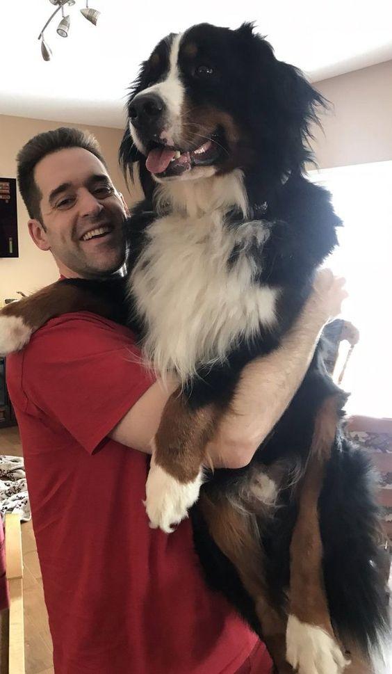 21 άτομα που ήθελαν ένα σκυλί αλλά κατέληξαν να πάρουν ένα γιγάντιο μάλλινο λύκο (Μέρος 2ο)