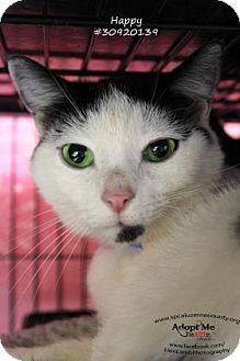 Philadelphia, PA - Domestic Shorthair. Meet Happy, a cat for adoption. http://www.adoptapet.com/pet/15123518-philadelphia-pennsylvania-cat