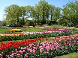 Flowers inspire
