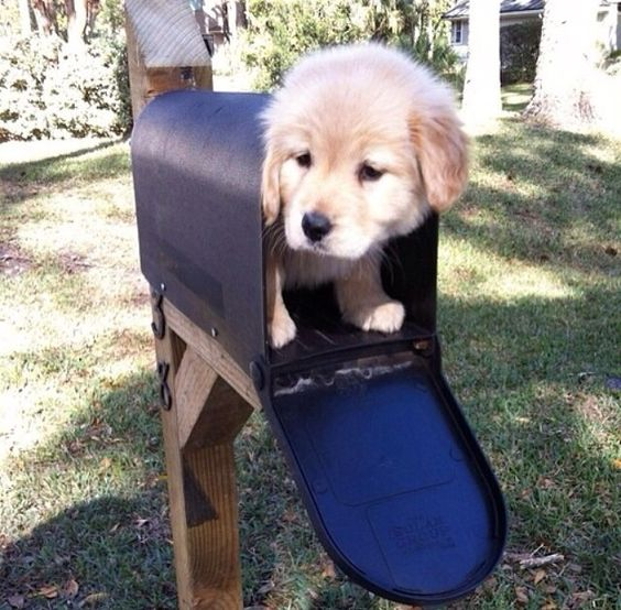 """No mail today"""