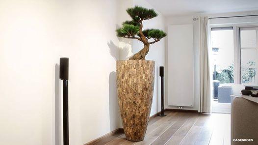 Bonsai is een Japans woord dat letterlijk 'boom in pot' betekent. Deze kunst variant van de Bonsai is geplaatst in een vaas gemaakt van zacht hout, de eerste houtlaag onder het schors van een teakboom. Deze zachte houtsoort lijkt op kurk en is verkrijgbaar in verschillende formaten. #bonsai #artificial #art #design #dutchdesign #oasegroen #ammerzoden #exclusive #exclusivedesign #wood #vases