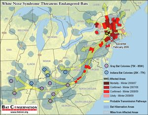 The future spread of WNS could impact the most important hibernation sites for the endangered Indiana and Gray bats. Map sources: Pennsylvania Game Commission, U.S. Fish and Wildlife Service, West Virginia Division of Natural Resources, Ontario Ministry of Natural Resources, Bat Conservation International, National Atlas, North American Atlas, Natural Earth.