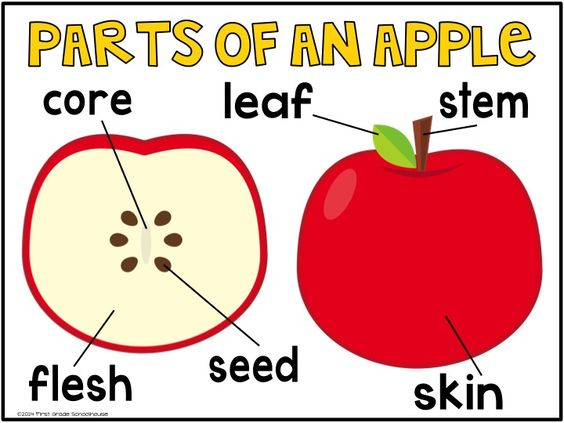 Activities  Apples And Poster On Pinterest