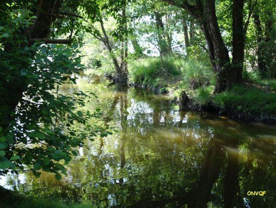Courant du Huchet de l'étang de Léon à Moilets-et-Mâa. http://onvqf.over-blog.com/2014/06/courant-du-huchet-du-lac-de-leon-a-moliets-et-maa-landes-40-aa.html