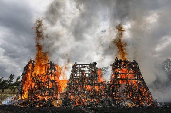 Fotos: Kenia quema más de 5000 armas de fuego El gobierno intenta parar el flujo de armamento ilegal en el país    Actualidad   EL PAÍS