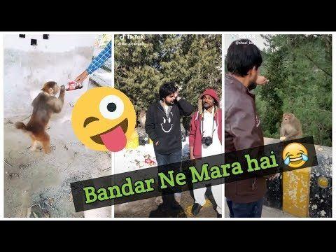 Bandar Ne Mara Hai Funny Monkey Tiktok Video Clips Tiktokpakistan Musically Tiktok Pro Youtube Monkeys Funny Bandar Funny