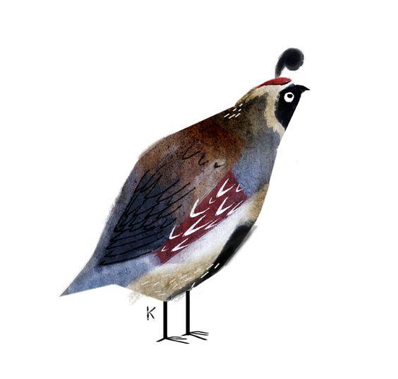 Birds - Pandagun: