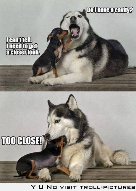 """Do I have a cavity? - I can't tell I need to get a closer look - TOO CLOSE!""   Husky inspection"