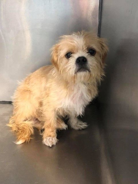 Adopt Jarvis On Petfinder Fluffy Dogs Dogs Cute Dogs
