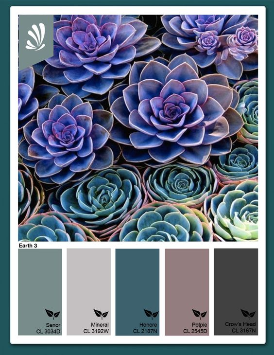 Bedroom: Teal Succulents
