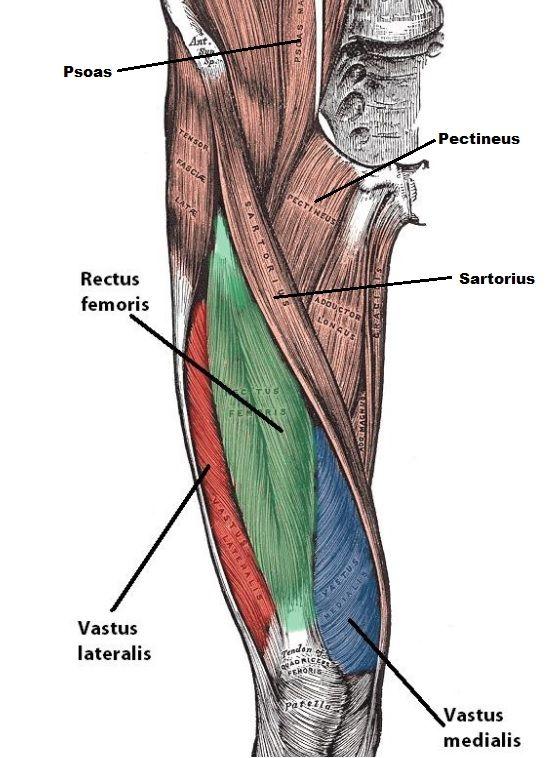 femoral triangle