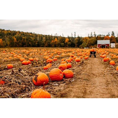 """Today in germany is a day like thanksgiving    #autumn #autumishere #autumnlove #Fall #fallishere #pumpkin #pumpkinseason #pumpkinpatch #erntedank"" Photo taken by @we_love_fall on Instagram, pinned via the InstaPin iOS App! http://www.instapinapp.com (10/04/2015)"