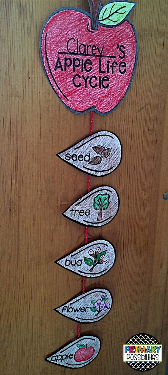 Life Cycle of an Apple simple but fun craft!