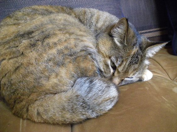 Davinci is sleeping on the sofa.