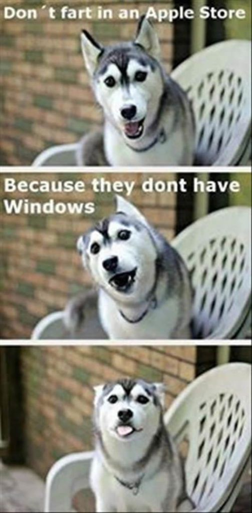 funny dog memes: apple store no windows: