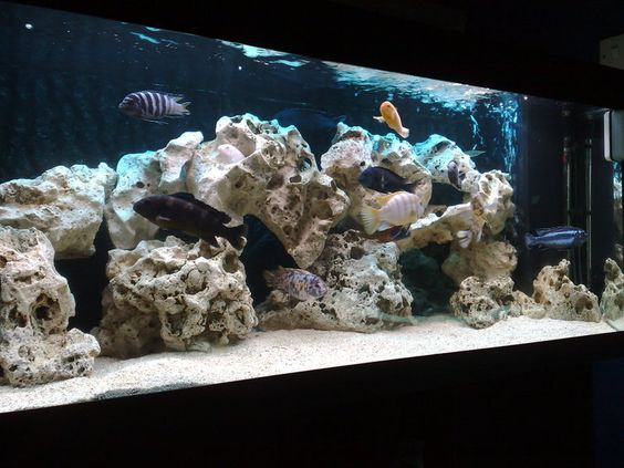 Cichlids africans and hiding spots on pinterest for African cichlid rock decoration