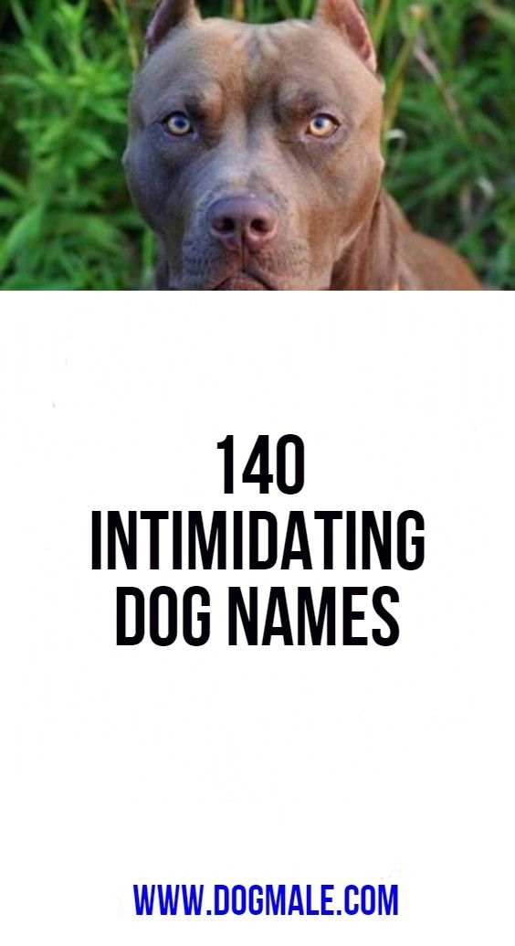 140 Intimidating Dog Names Dog Names Cool Dog Names Boys Funny Dog Names