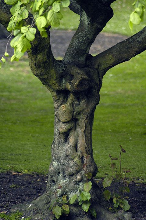 Tree face in Crescent City CA