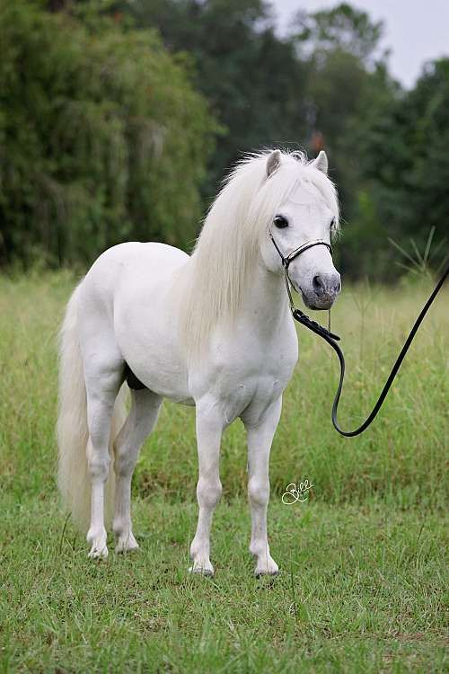 What A Beautiful Pony And Such A Sweet Face With Images
