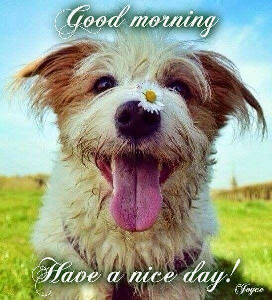 Happy Dog Good Morning dog good morning good morning quotes good morning  image quotes im… | Funny good morning messages, Funny good morning images, Good  morning dog