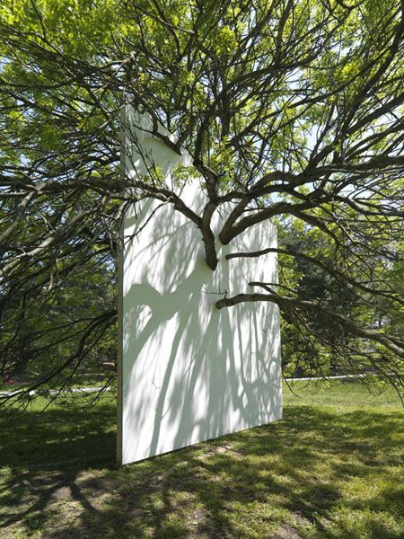 Letha Wilson | Wall in Blue Ash Tree | This piece is an interior wall built inside and alongside a Blue Ash Tree at the Morton Arboretum in Lisle, Illinois (outside of Chicago).