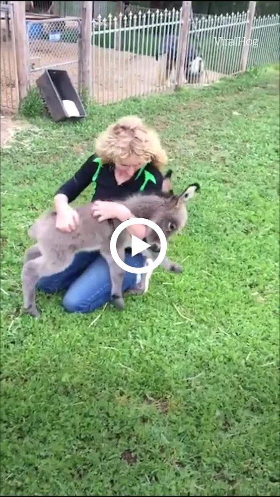 mulher brincando dom o carneirinho
