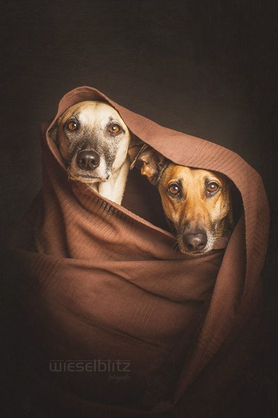 Photo – Elke  Vogelsang: