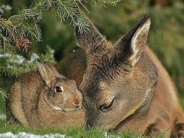 The real #Bambi and #Thumper!!!