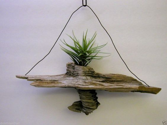 Pinterest the world s catalog of ideas for Air plant art