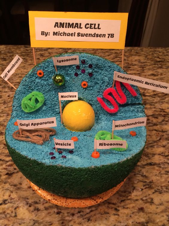 Animal Cell Model | Little Ones | Pinterest | Cell Model, Animal Cell ...