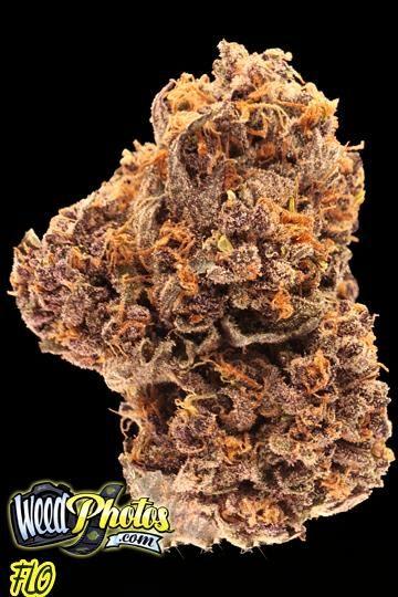 Flo Marijuana Strain Pictures