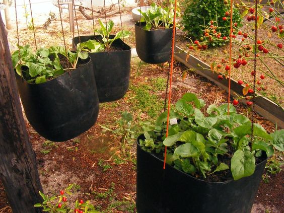 A day in the life: A little respite for the garden