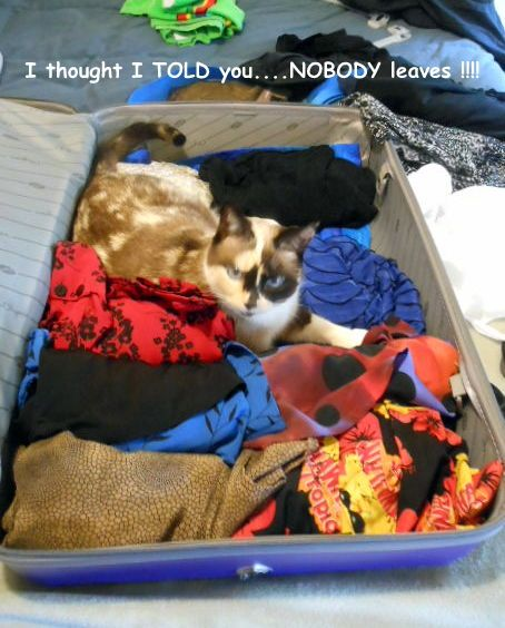 What to do with your pets when you travel | How to Find a Petsitter When You Go on Vacation