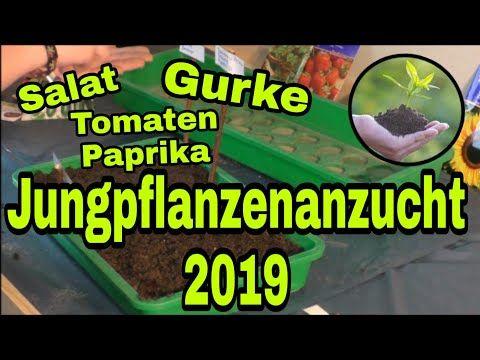Jungpflanzenanzucht Teil1 Salat Paprika Tomate Selbstversorger Rigotti Youtube Pflanzen Tomaten Paprika