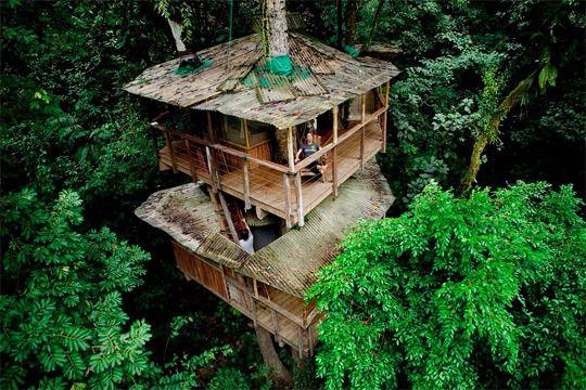 Community of treehouses