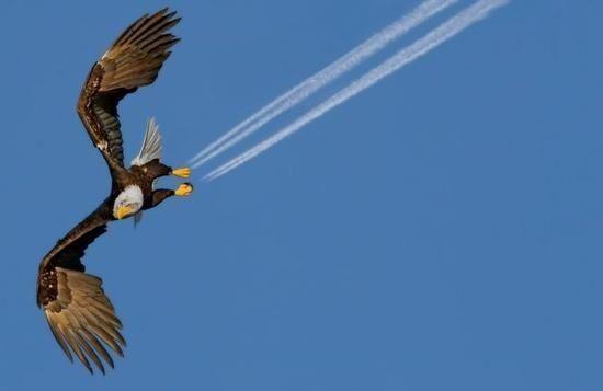 F16 Eagle