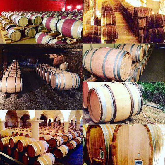 Cellars visited this year !  #bourgogne #burgundy #bordeaux #madiran #champagne  #vin #dégustation #winelover #Vineyard #winetasting #tasting #wine #vigne #vines  #vignoble #naturalwine  #instawine #viticulture  #winegeek #winelover #vintagewine  #instavinho  #instadrink #instamood #wineblog #winestagram #wein #vino #vinhos