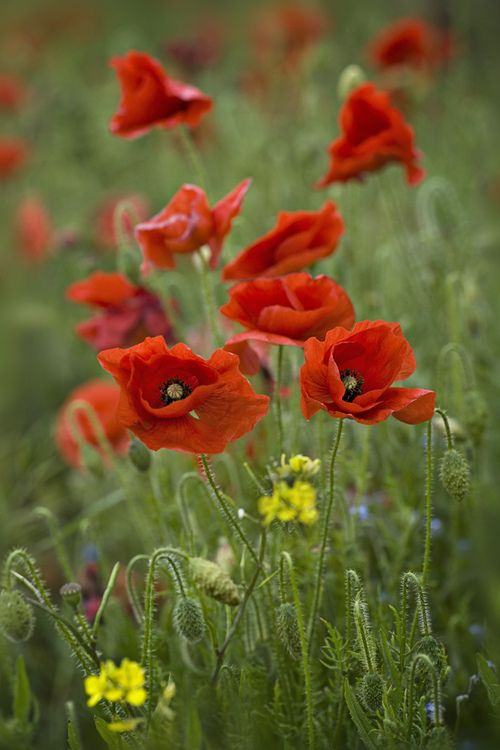 """Lest We Forget"" (by Jacky Parker Floral Art)"
