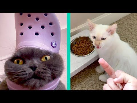 Best Cat Memes Compilation Of 2020 Part 20 Funny Cats Youtube In 2020 Best Cat Memes Cool Cats Cat Memes