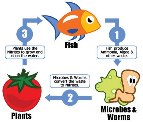 aquaponics  easy diy and diy and crafts on pinterestdiagram nitrogen cycle